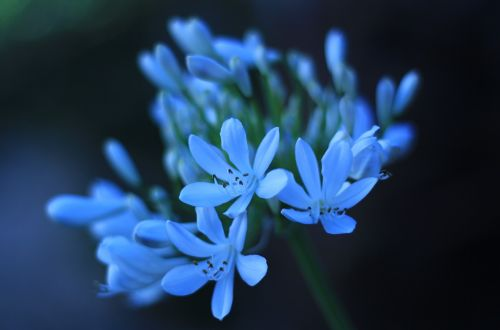 žiemos sodas,baltas žiedlapis,gėlė,žiedlapis,gamta