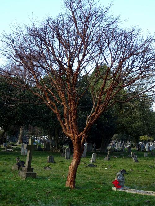 kapinės, kapinėse, kapas, kapai, kapinės, kapinės, kapas, kapai, kapinės, kapinės, mirtis, miręs, palaidoti, laidojimas, laidotuves, laidotuves, žiemos kapinės