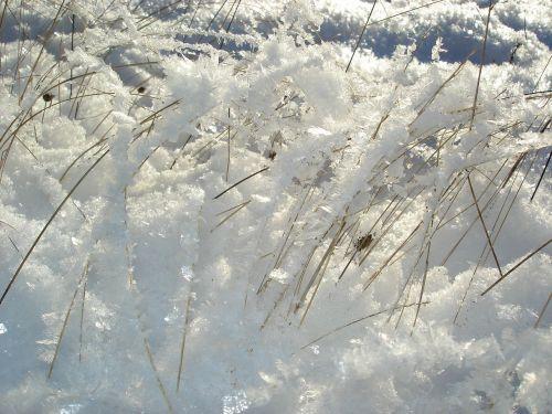 žiemos nuotaika,žolė,sezonas,balta,šaltas,ledas,sniegas,žiema,šaltis,snieguotas,sušaldyta,lauke,oras,sniegas,Saunus,ledinis,sniegas,blizzard,sniegas