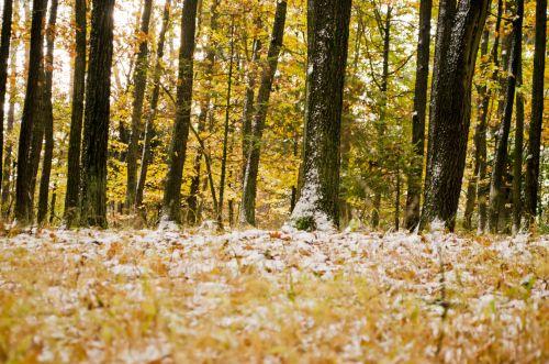 žiema, sezonas, sniegas, kraštovaizdis, šventė, fonas, drobė, Čekija & nbsp, respublika, Highland, medžiai, medis, miškas, žiemos sezonas