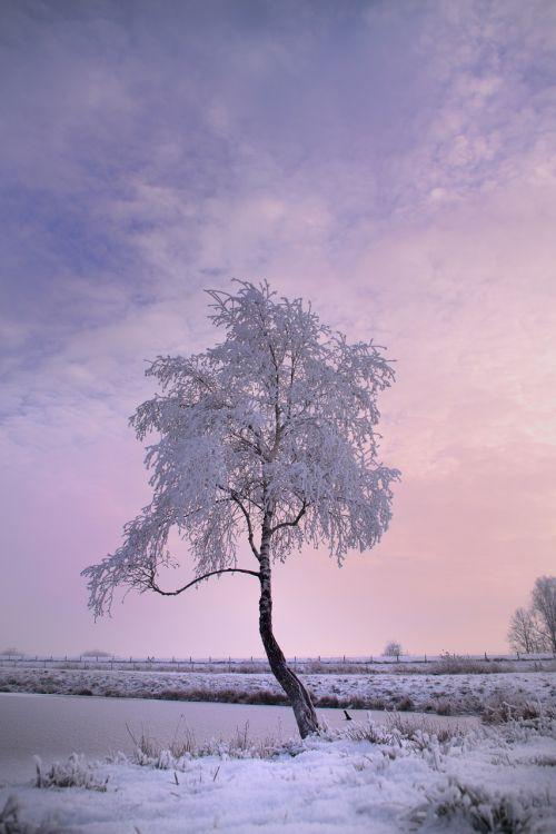 žiemos medis,sniegas,žiema,gamta,šaltas,medis,žiemą,snieguotas,šaltis,auskaras,filialas,ledas,balta,sniego magija,žiemos svajonė,ledinis,sušaldyta,ledas,žiemos medžiai,dangus,Kahl,kraštovaizdis,žiemos laikas,žiemos magija