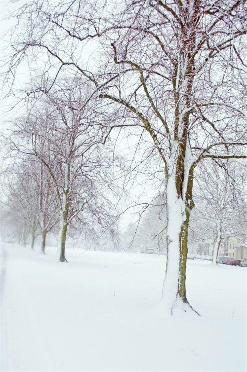 snieguotas, sniegas, snieguotas, sezonai, filialas, filialai, žiema, snaigė, temperatūra, gamta, fonas, be, lapai, gražus, xmas, Kalėdos, parkas, kraštovaizdis, žiemos medžiai - žiemos sezonai