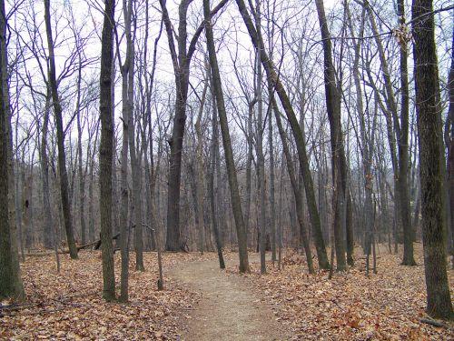 miškai, miškas, medžiai, žiema, lapai, kelias, žiemos miškai