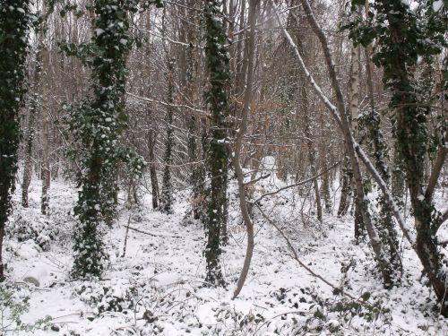 žiema, miškai, snieguotas & nbsp, scena, miškas, žiemos miškai