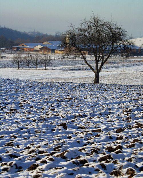 Žemdirbystė, žiema, sausis, winterland