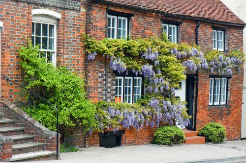 Wisteria,namas,padengtas,auga,gėlės,augalas,raudona plyta,graži,senas,architektūra