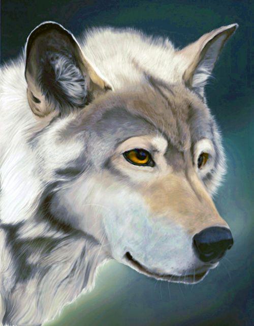 vilkas,pamoka,miškas,gaubtas,elnių parkas,zoologijos sodas,gamta,laukinio gyvenimo parkas