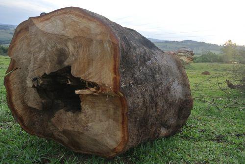 didelis,įrašyti,mediena,medis