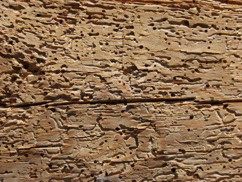 mediena,medienos kirtimas,supuvę,senoji mediena,tekstūra,fonas,supuvusi mediena