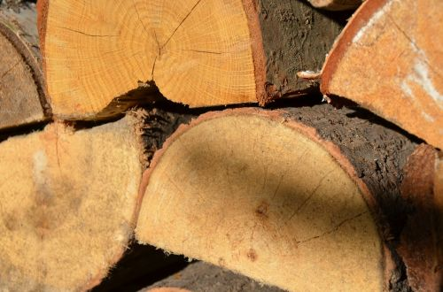 mediena,gamta,bagažinė