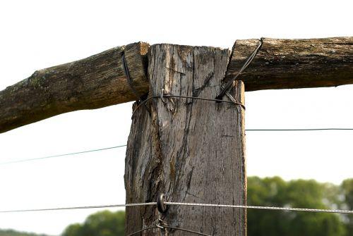 mediena,ramstis,tvoros