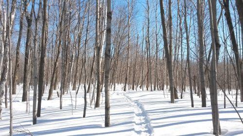 mediena,sniegas,žiema,miškas,medžiai,kelias,gruodžio mėn .,gamta,žiemos peizažas,šaltas,kraštovaizdis,laukas,snieguotas kraštovaizdis,snieguotas,Kanada,balta