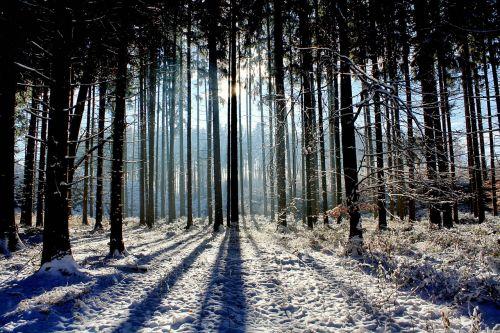 mediena, gamta, kraštovaizdis, šviesa, saulė, žiema, panorama, miškas, sniegas, panoraminis vaizdas, žiemą, žiemą, be honoraro mokesčio
