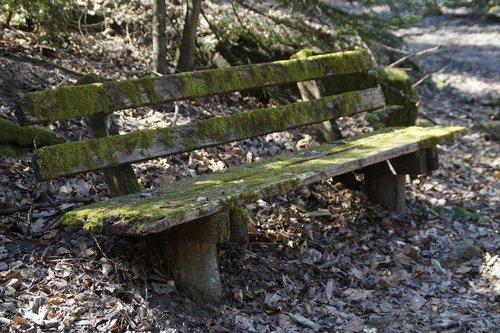 mediena, pobūdį, medis, samanos, bemoost, bankas, miškas, poilsio, tylus, vieta, slapukas, žygis, žygiai, pailsėję, užsiteršimo, skilimas, ramybės vieta, atskleisti, poilsio suoliukas, pensijų, senas