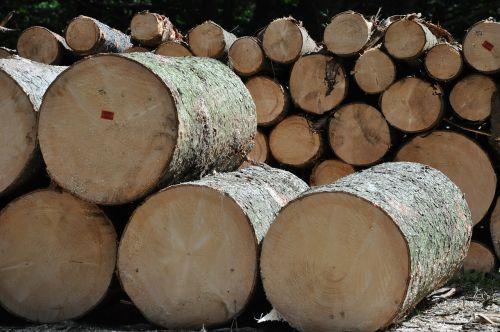 mediena,medis,lentpjūvė,suprasti,gamyba,miškas,gabaliukas