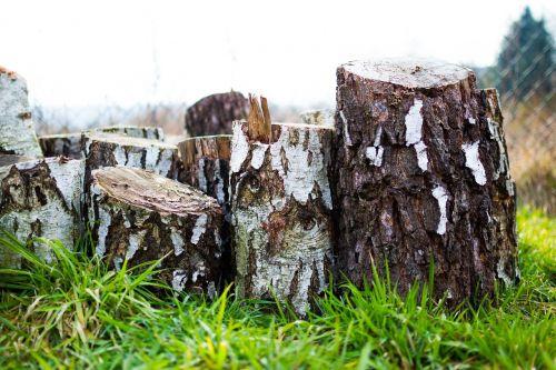 mediena,mediena,mediena,kietmedis,beržas,žievė,supjaustyti,ugnies mediena,makro,paviršius,tekstūra