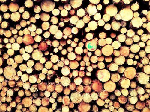 mediena,miškas,gamta,bagažinė,tekstūra,struktūrą,konary,supjaustyti,modelio medžiaga,ekologija,medis,medžių kamienus,pušis,sodininkystė