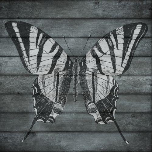 mediena,drugelis,medinis,lentjuosčiai,juoda,balta,vienspalvis,gamta,pavasaris,vasara,dizainas,natūralus,senas,lenta,retro,vintage,mediena,tekstūra,lenta