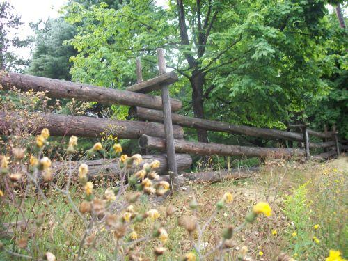 tvora, tvoros, bėgiai & nbsp, tvora, medinis nendrės tvora, log & nbsp, tvora, gėlė, gėlės, laukinės vasaros spalvos, medis, pušys, gamta, lauke, ūkis, sodyba, medžio bėgių tvora
