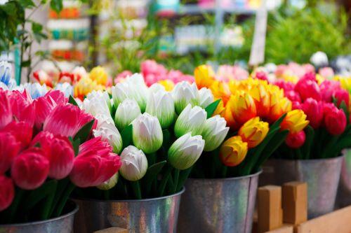 Amsterdamas, mediniai tulpės, kibiras, kaušai, spalvos, spalvinga, rodyti, olandų, netikras & nbsp, gėlių, gėlė, grupė, holland, daiktas, daug, suvenyras, tulpė, tulpės, medinis, mediniai tulpės