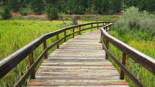 medinis takas,medinis tiltas,tiltas,takas,lauke,žalias,gamta,aplinka,kelias,kelias,medinis,parkas,vasara,žolė,folija