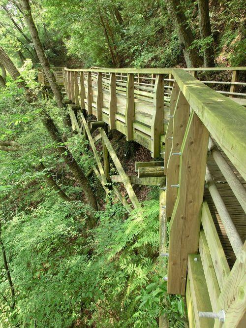 medinis takas, takas, kelias, mediena, medinis, lauke, medis, pėsčiųjų takas, vaikščioti, tiltas, miškas