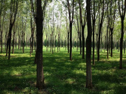 miškai,boulevard,saulės šviesa
