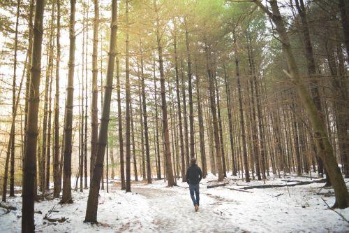 miškai,miškas,medžiai,žiema,asmuo,vaikščioti,sniegas,šaltas,vaikščioti,vaikščioti,pasivaikščiojimas,gamta,vaizdingas,kraštovaizdis,kelias,pėsčiųjų takas