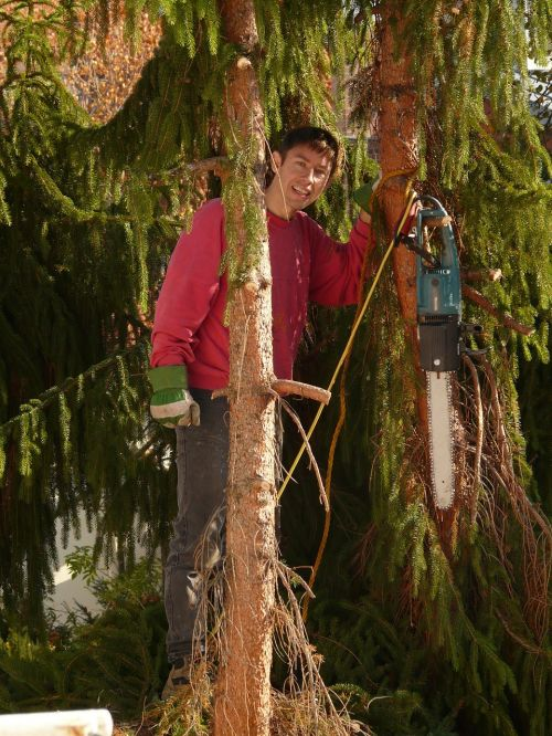 medžio dirbiniai,medis,pamačiau,eglė,viršuje,aukštas,rizika,mediena,grandininiai pjūklai,lipti,darbas