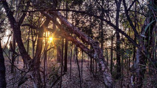 Woolland,bushland,gamta,mediena,medis,kraštovaizdis,saulėtekis