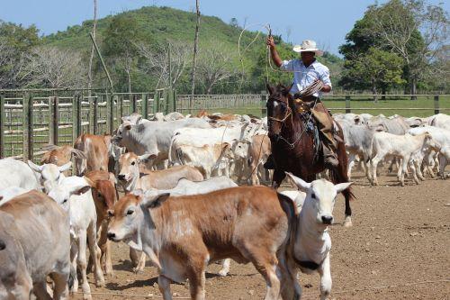 darbas,laukas,valstietis,arklys,gyvuliai