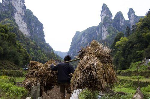 darbuotojai,ūkininkas,skurdas,carring,vežti,Kinija,fenghuang