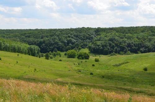 yar,spindulys,miškas,krūmai,kraštovaizdis,gamta,augalas,žalumos,miške,žolė,medis,vasara,žali lapai,Iš arti