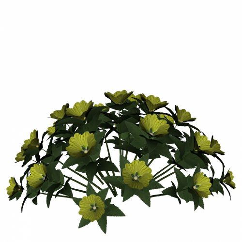 krūva, gėlė, pavasaris, balta, geltona, narcizas, dekoratyvinis, daffodil, jonquil, Iš arti, izoliuotas, apdaila, niekas, gėlių, žiedlapis, lapai, sepal, žiedas, dovanos, objektas, stiebas, žiedynas, sodas, augalas, grožis, elegancija, gražus, fonas, gamta, geltona gėlių krūva