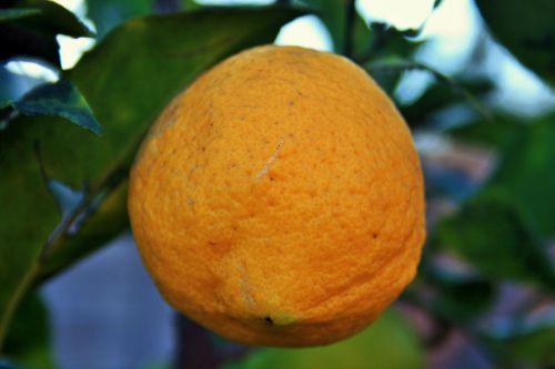 vaisiai, citrina, geltona, citrusiniai, geltona citrina
