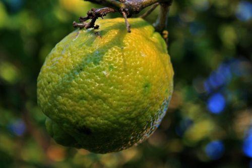 vaisiai, citrusiniai, citrina, geltona, geltona citrina