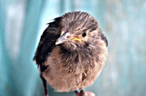 gyvūnai, paukštis, girlianda, jaunas, jaunas, juodas & nbsp, apykaklė, naminis gyvūnėlis, jaunas jaunikis