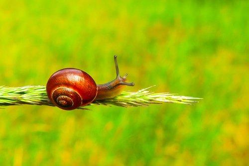 zaroślarka, kad bendras, sraigė, moliuskai, gyvūnai, pobūdį, bestuburiai, Iš arti, augalų, Kłos, vejos, žalias, brzuchonóg, spiralė, skaidrę, spalva, gražus, gyvas, pavasaris, aplinka, biologija, Niekas