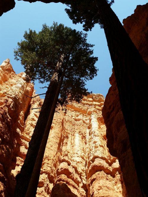 Sion nacionalinis parkas,pušis,Utah,zion,nacionalinis,parkas,kraštovaizdis,kanjonas,Rokas,Nacionalinis parkas,raudona,usa,geologija,reljefas,takas,dykuma