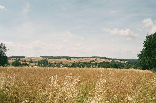 liepa, kukurūzai, laukas, vasara, krasnystawskie & nbsp, vasara, aukso laukai liepa