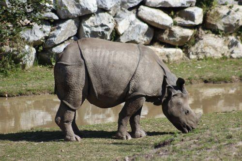 zoologijos sodas,kelionė,gyvūnas,gamta,žinduolis,laukinė gamta,parkas,laukiniai