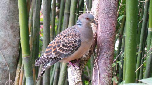 zoologijos sodas,laukinė gamta,balandis,gyvūnas,paukščiai,Tokyo,ueno zoologijos sodas