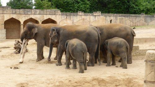 Zoologijos sodas Hanoveris,dramblys,nuotykių zoologijos sodas,džiunglių rūmai,žemutinė Saksonija