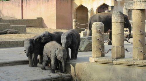 Zoologijos sodas Hanoveris,džiunglių rūmai,dramblys,žemutinė Saksonija,nuotykių zoologijos sodas